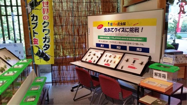 世界の昆虫展 @ ふれあい館ギャラリー