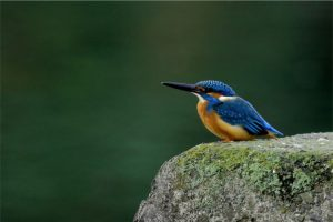 新宮太郎の野鳥写真展